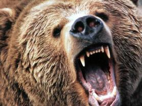 grizzly mouth